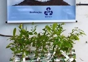 CR Metais - Campanha Adote uma Árvore